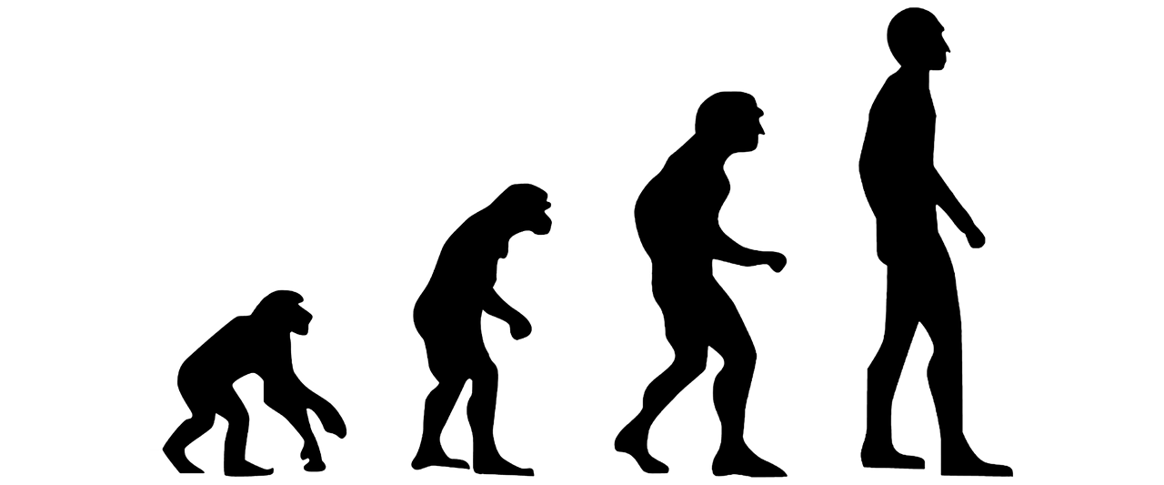 Image depicting evolution from ape to human